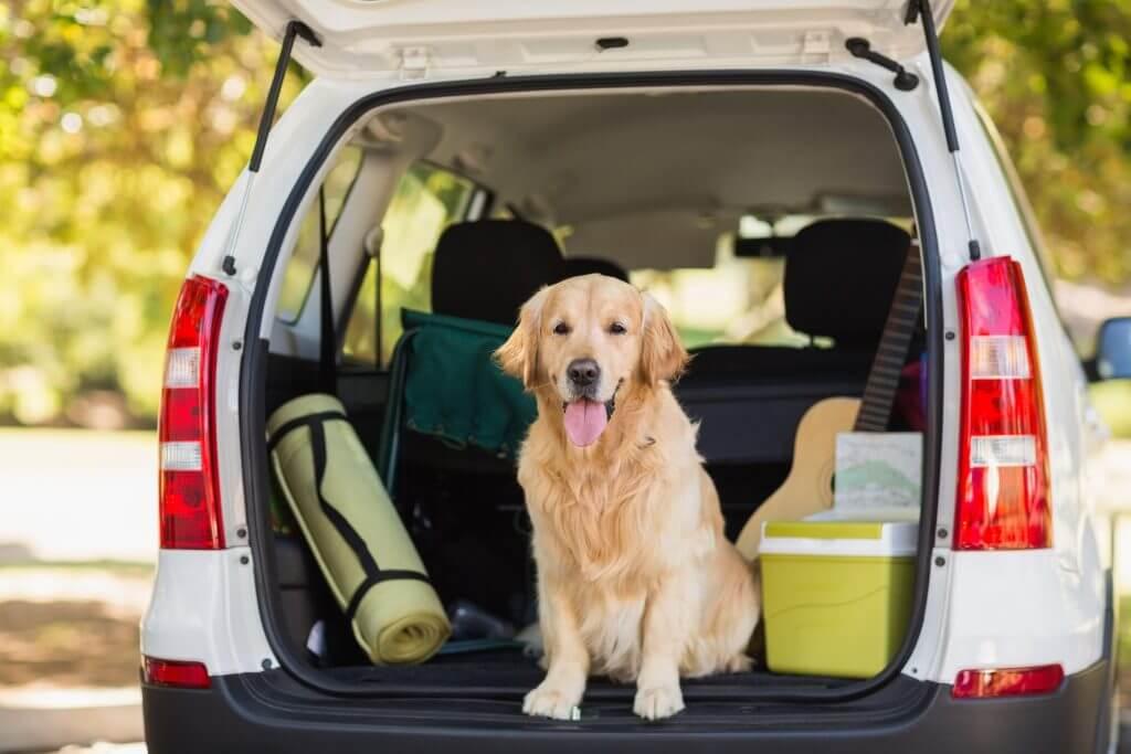 Cómo debemos viajar con mascotas en el coche